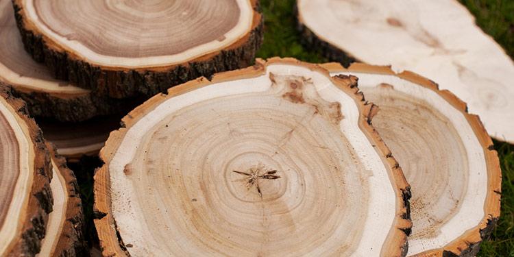Brandmalerei geeignetes Holz